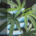 BitX Funding Blog Image | Cannabis Equipment Loans
